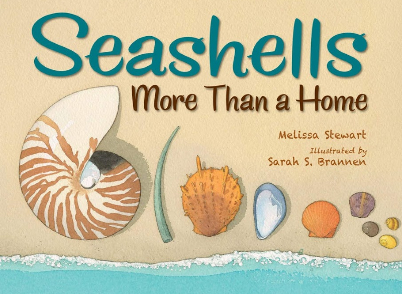 'Seashells: More Than a Home,' a Lesson Plan